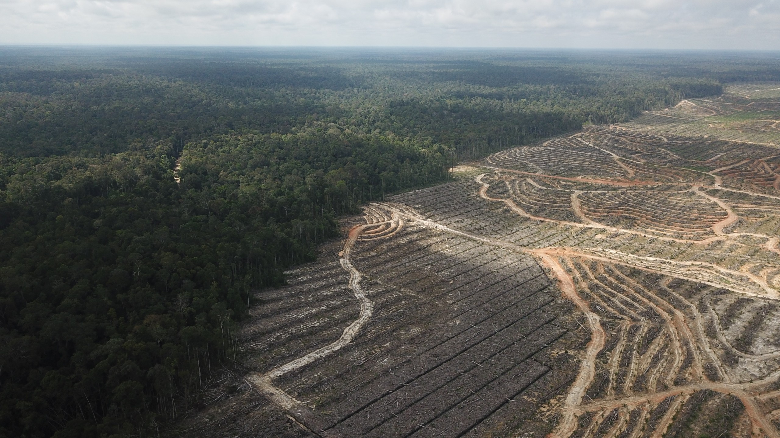 #ConflictPalmOil
